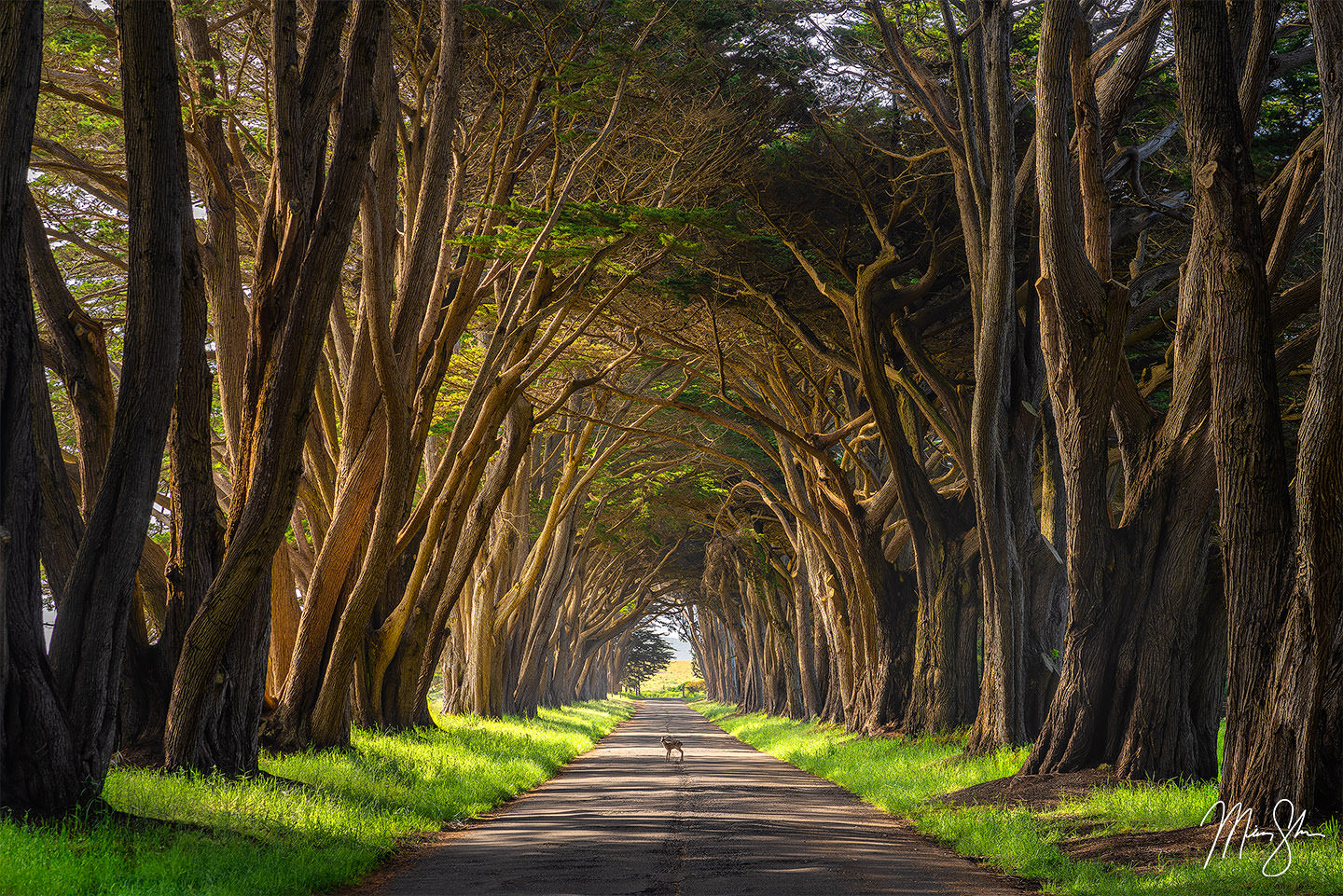 Forest photography: Cypress Tree Tunnel, Point Reyes California