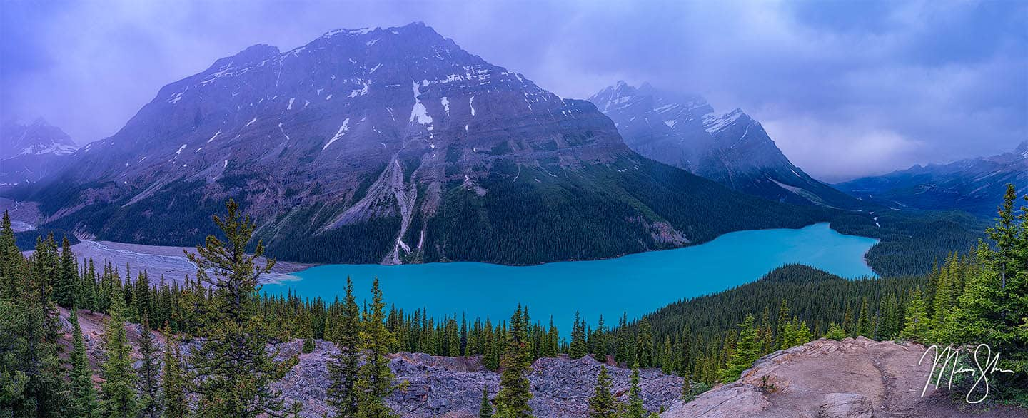 A Wolf in the Midst - Peyto Lake, Banff National Park, Alberta, Canada