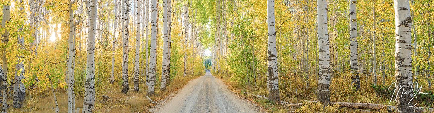 Aspen Alley Panorama - Aspen Alley, Wyoming