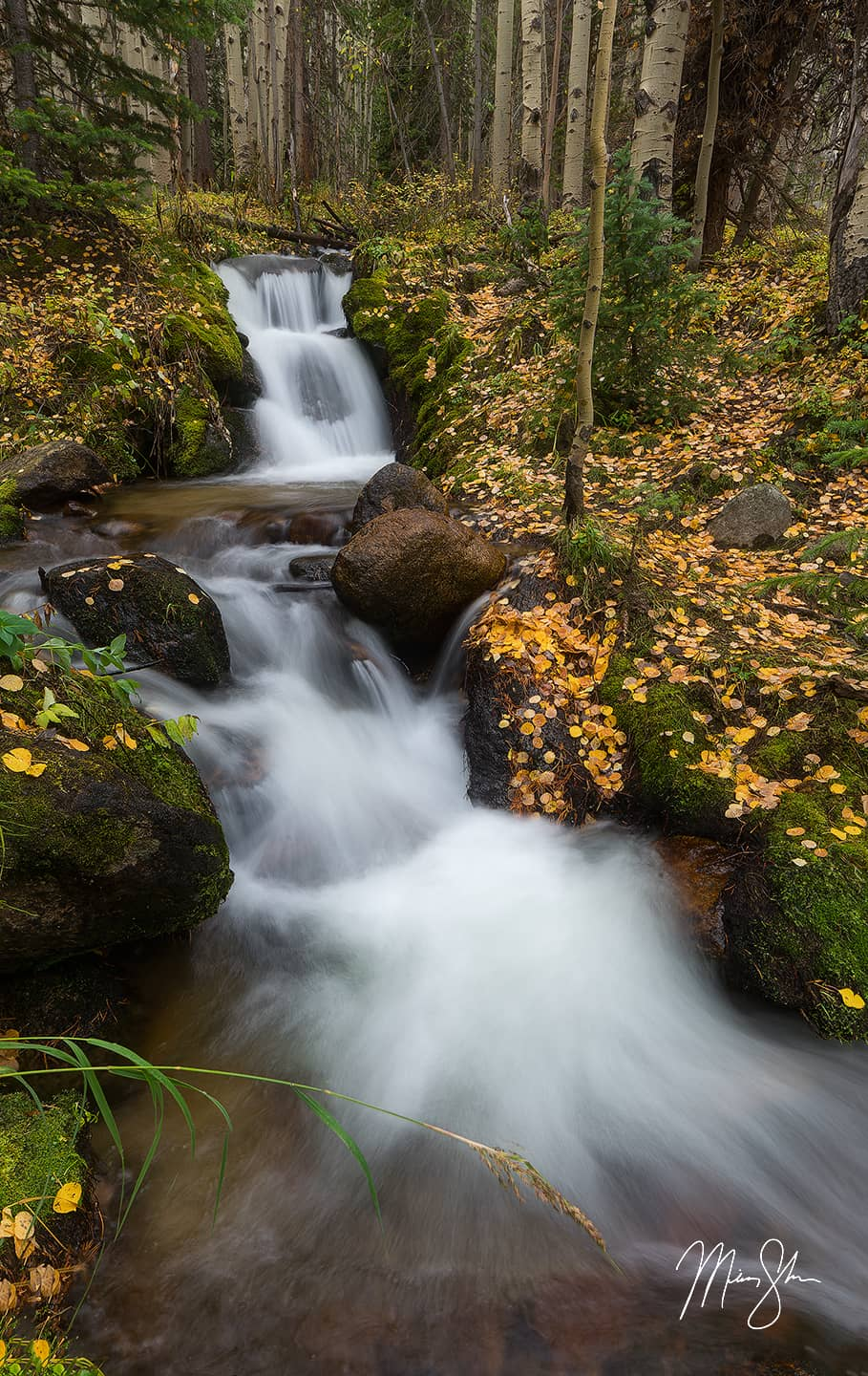 Open edition fine art print of Aspen Gold at Boulder Brook from Mickey Shannon Photography. Location: Boulder Brook, Rocky Mountain National Park, Colorado