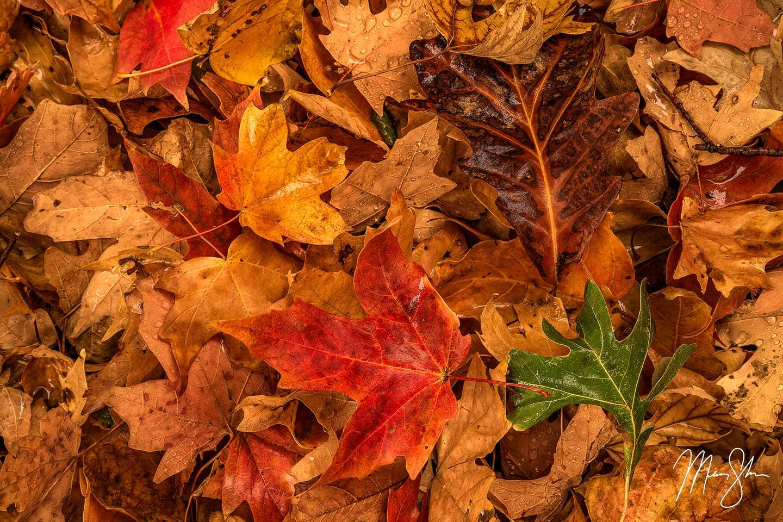 Autumn Kaleidoscope - Wichita, Kansas