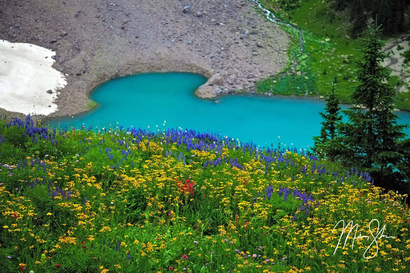 Blue Lake Wildflowers - Ridgway, San Juans, Colorado