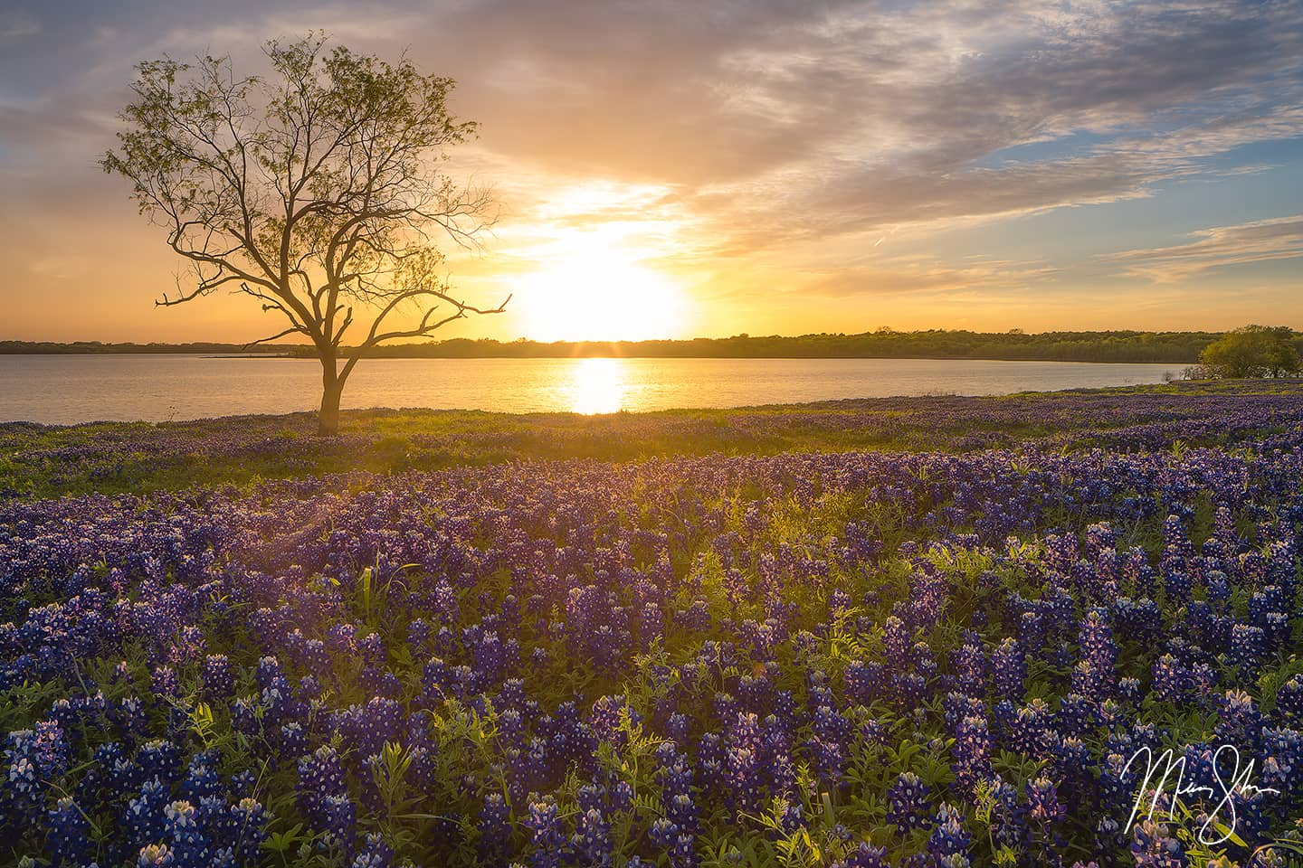 Bluebonnet Sunset - Bardwell Lake, Ennis, Texas