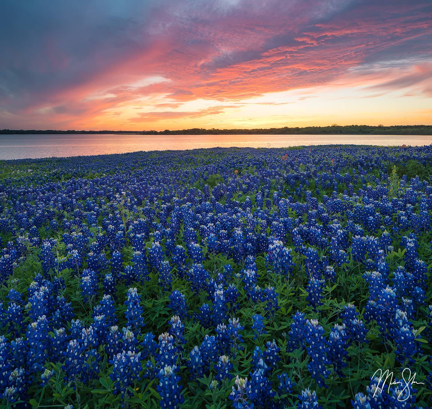 Open edition fine art print of Bluebonnets Over Ennis from Mickey Shannon Photography. Location: Bardwell Lake, Ennis, Texas