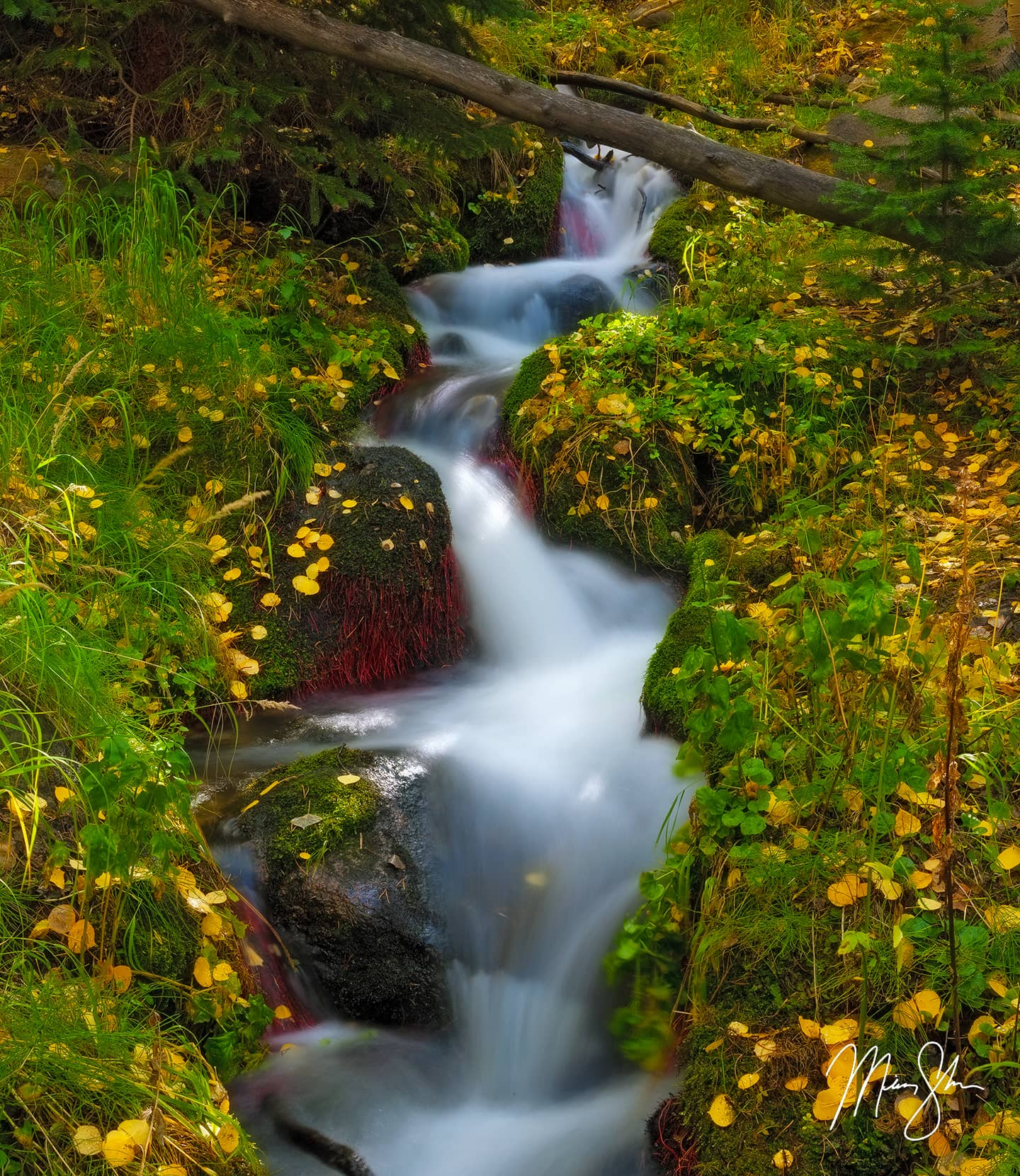 Open edition fine art print of Boulder Brook Gold from Mickey Shannon Photography. Location: Rocky Mountain National Park, Estes Park, Colorado