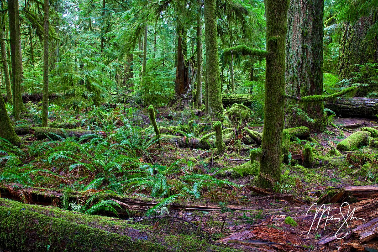 Cathedral Grove Forest