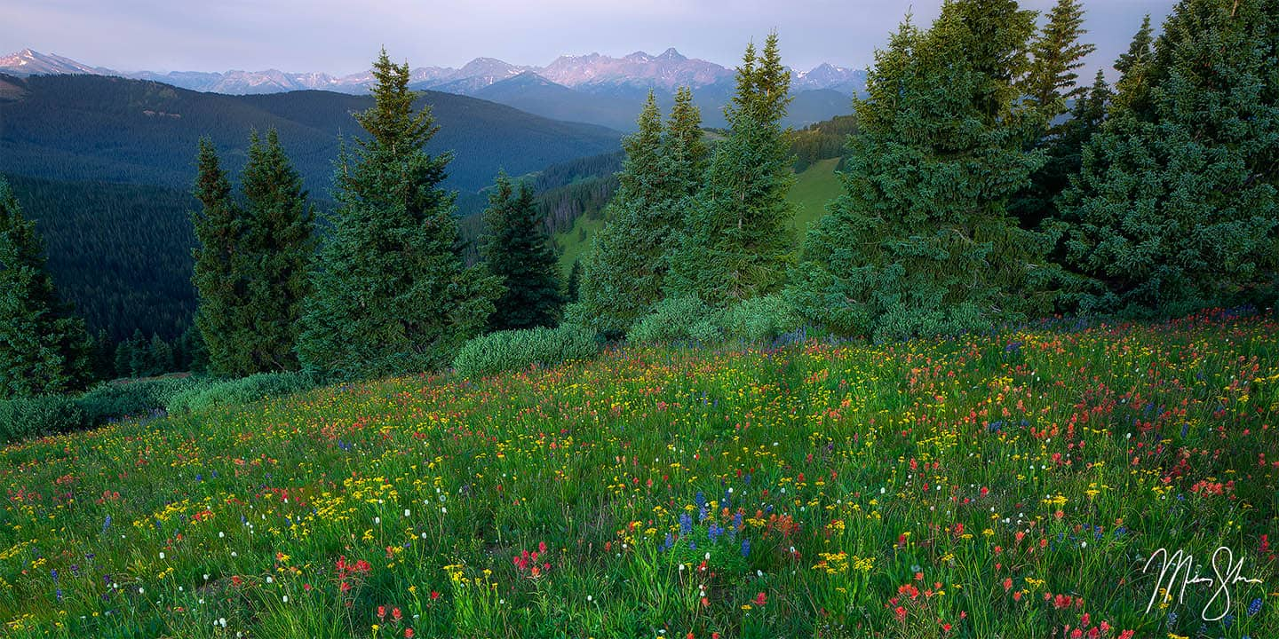 Central Colorado Photography: Shrine Ridge wildflowers