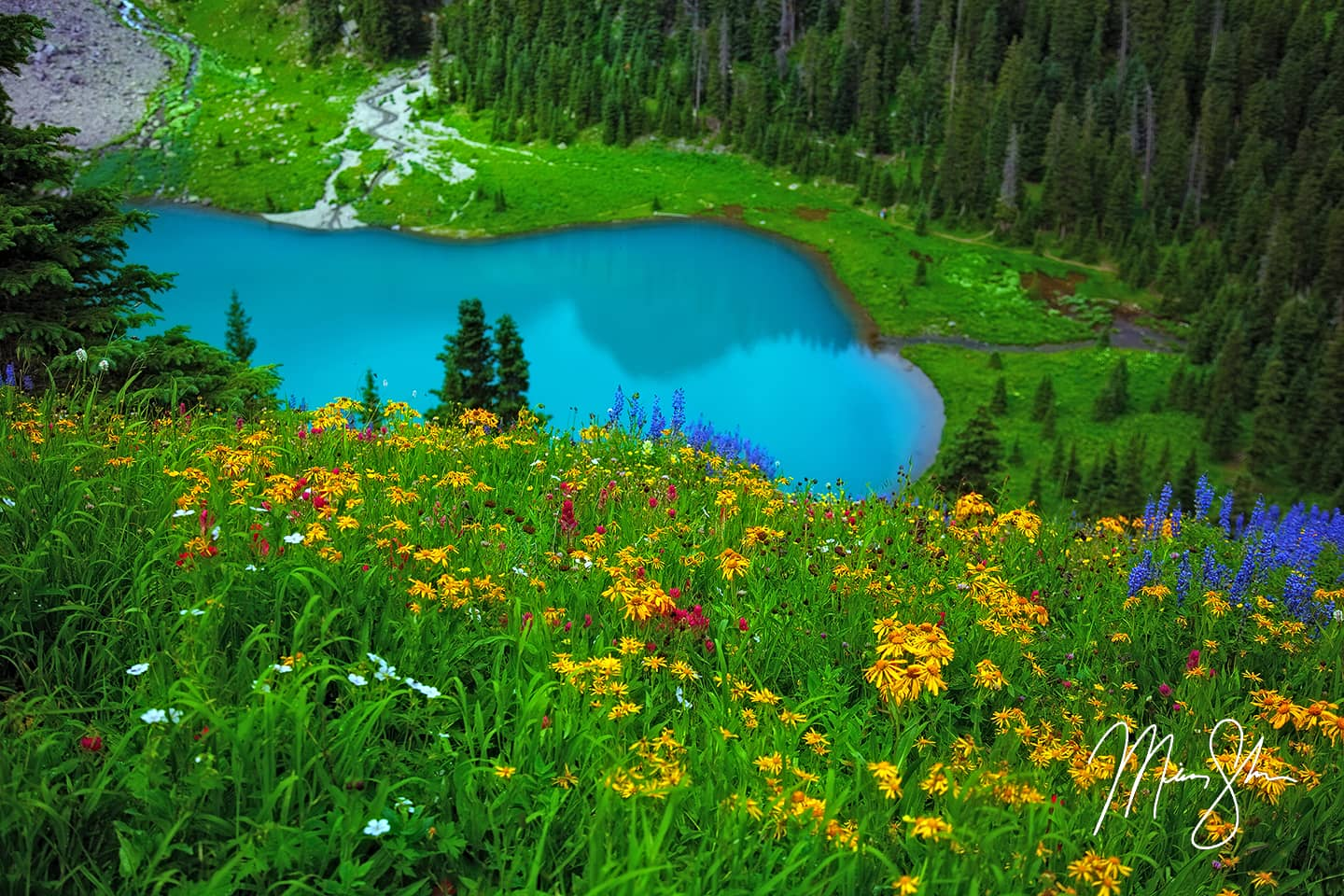 Colorado Wildflowers - Blue Lake, San Juans, Colorado