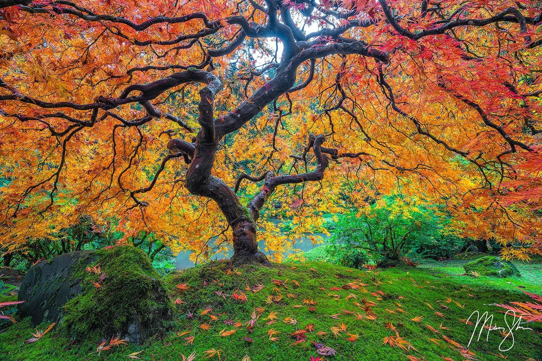 Firebolt - Portland Japanese Garden, Portland, Oregon