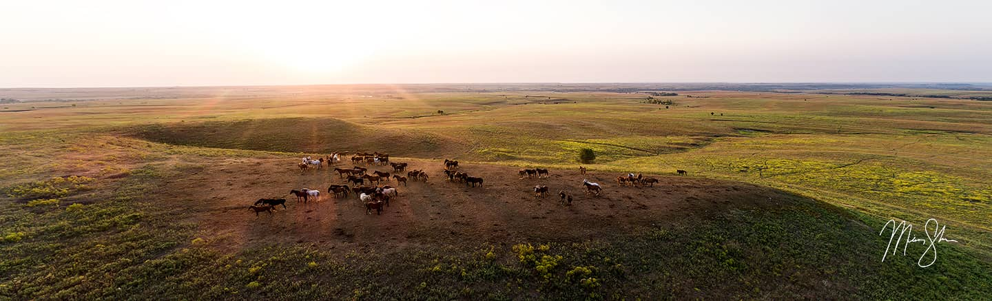 Open edition fine art print of Flint Hills Horses Panorama from Mickey Shannon Photography. Location: Teter Rock, Cassoday, Kansas