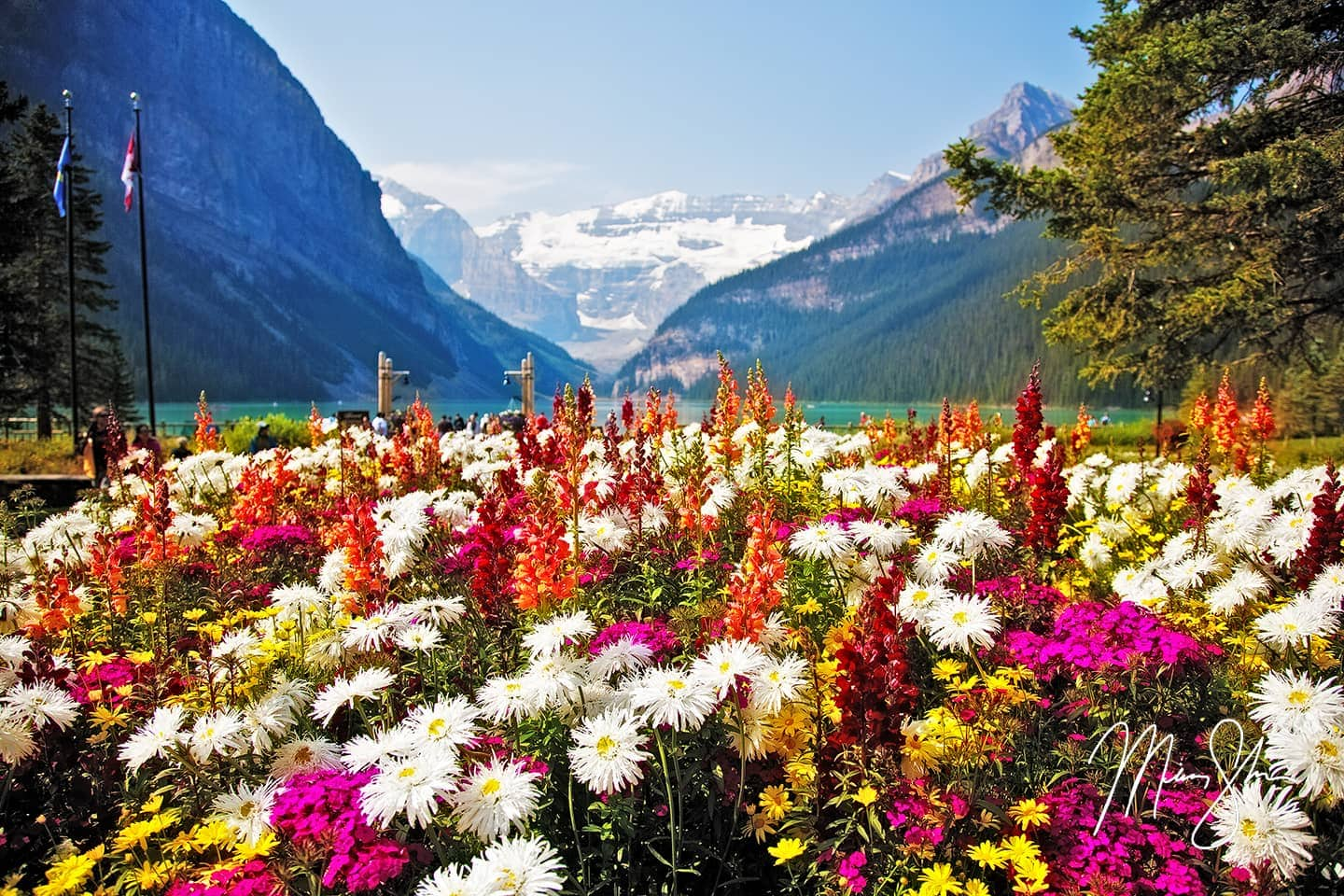 Open edition fine art print of Garden Flowers Of Lake Louise from Mickey Shannon Photography. Location: The Fairmont Chateau, Lake Louise, Banff National Park, Alberta, Canada