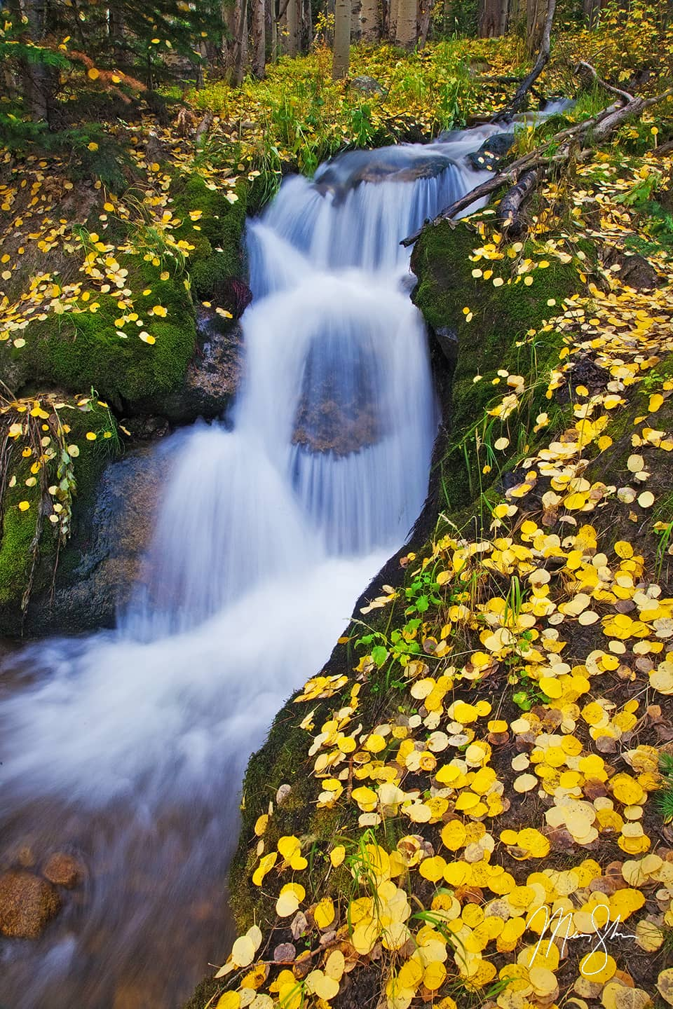 Golden Boulder Brook
