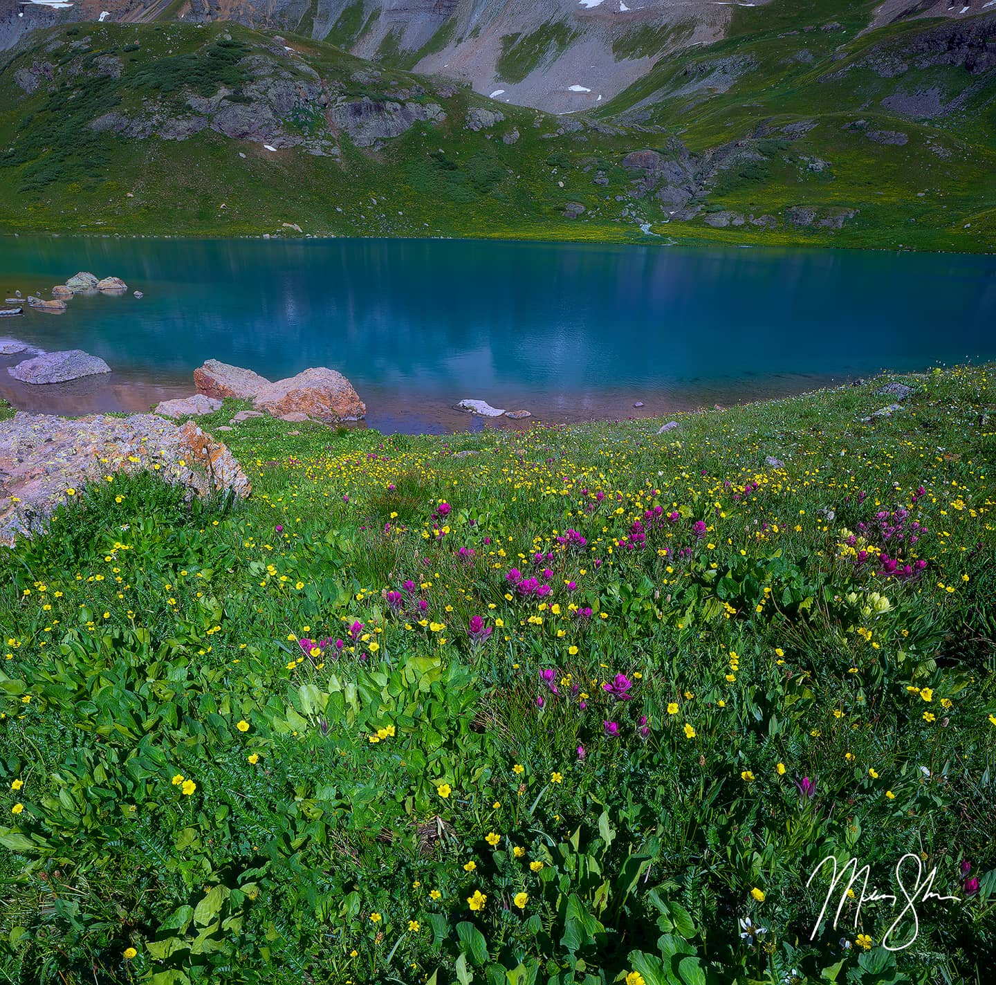 Ice Lake Wildflowers - Ice Lake, Silverton, Colorado
