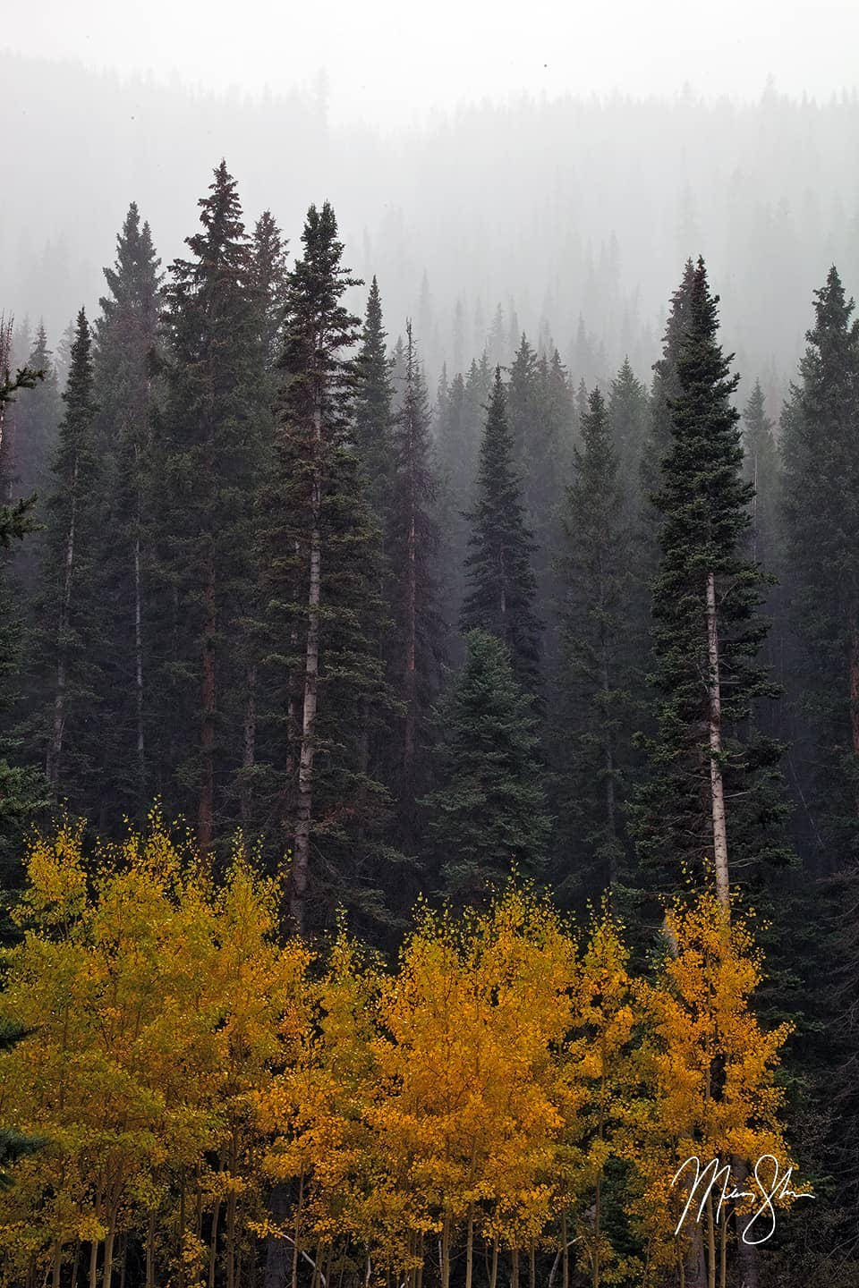 Layers of Fall