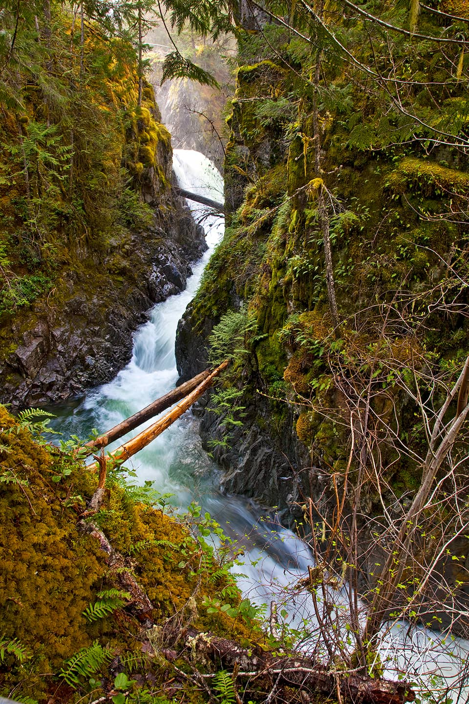 Little Qualicum Falls Canyon