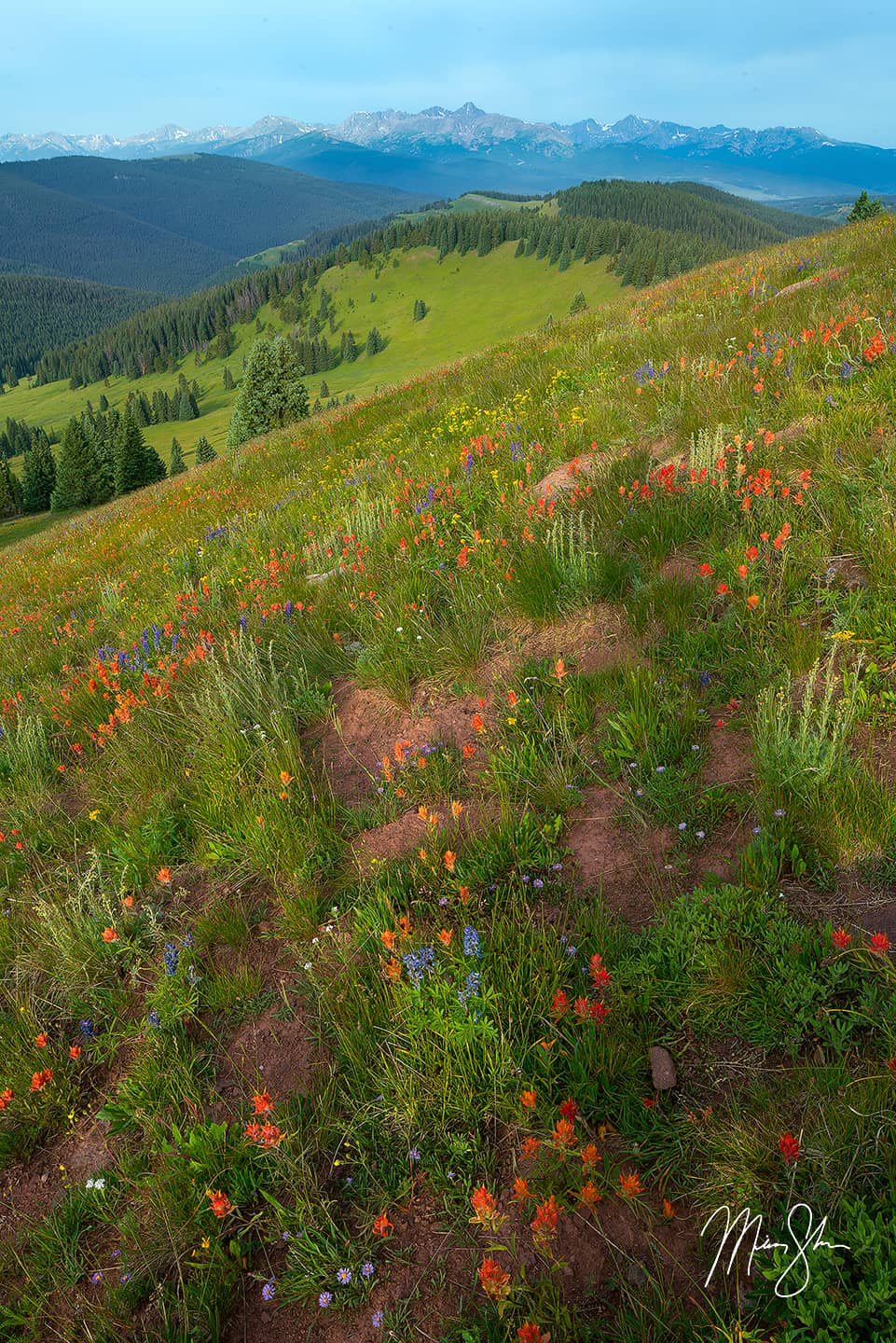Open edition fine art print of Mount of the Holy Cross Wildflower View from Mickey Shannon Photography. Location: Shrine Ridge, Colorado