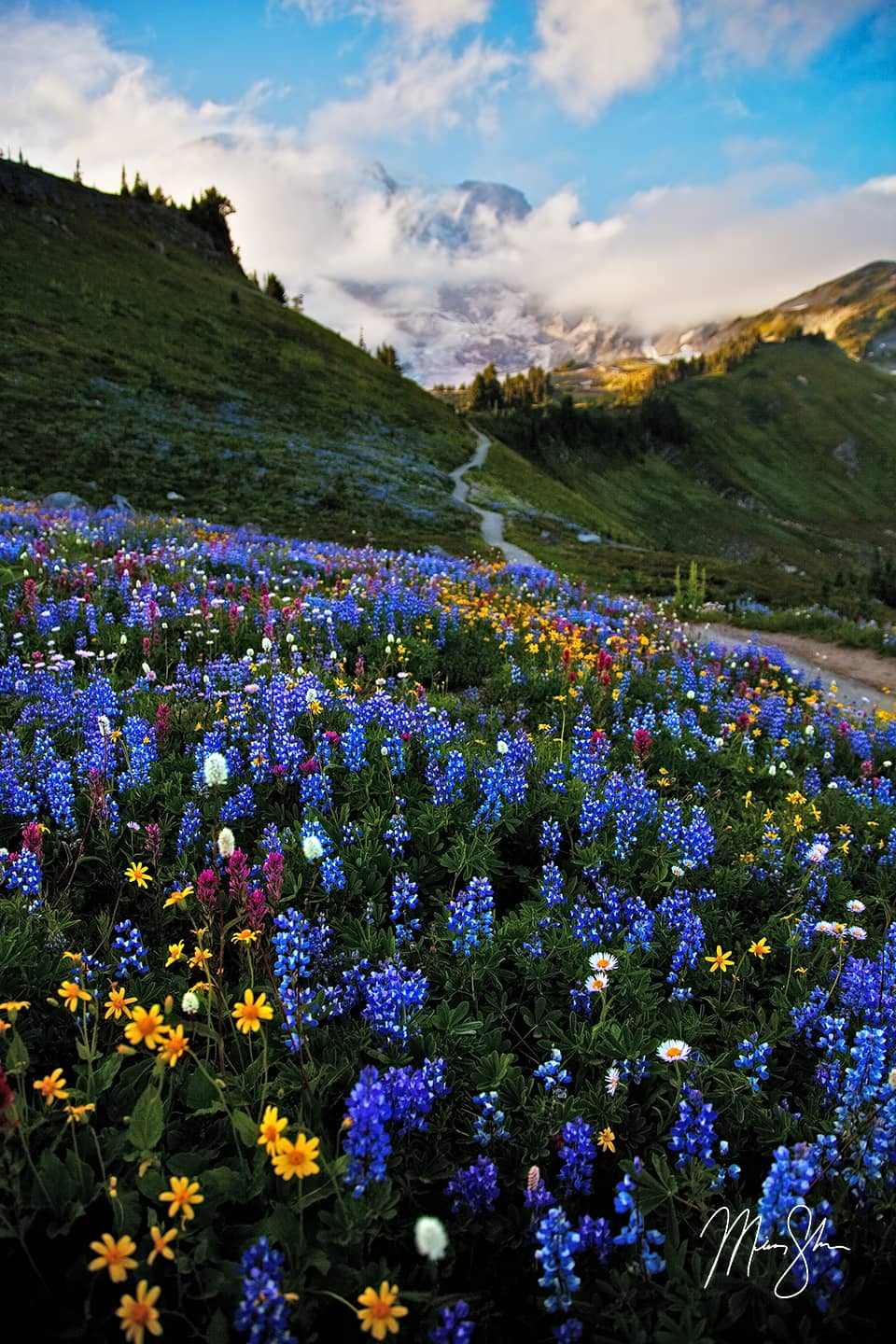 Open edition fine art print of Mount Rainier Wildflowers from Mickey Shannon Photography. Location: Mount Rainier National Park, Washington, USA