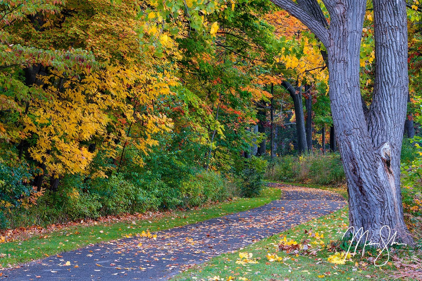 Open edition fine art print of Niagara Parkway Autumn Trail from Mickey Shannon Photography. Location: Niagara-on-the-Lake, Ontario, Canada