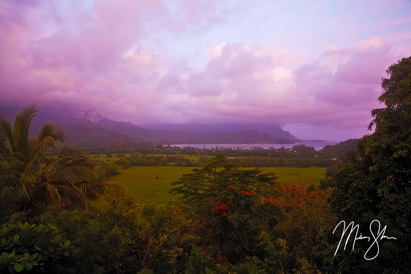 Purple Hanalei Bay