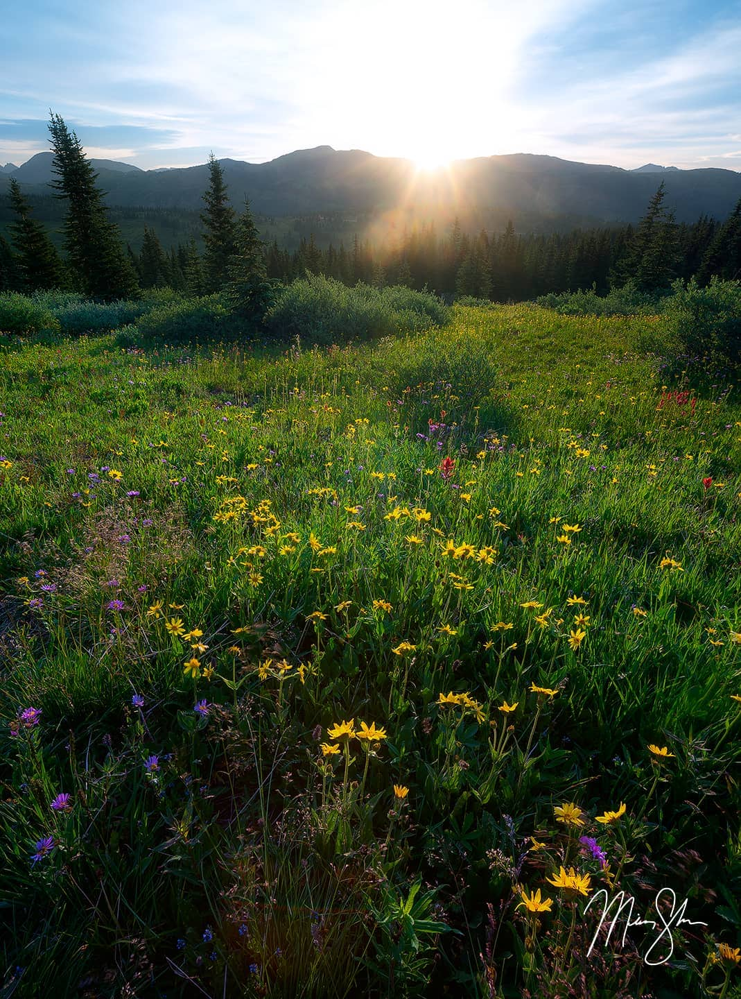 Open edition fine art print of Shrine Ridge Wildflower Sunburst from Mickey Shannon Photography. Location: Shrine Pass, Colorado