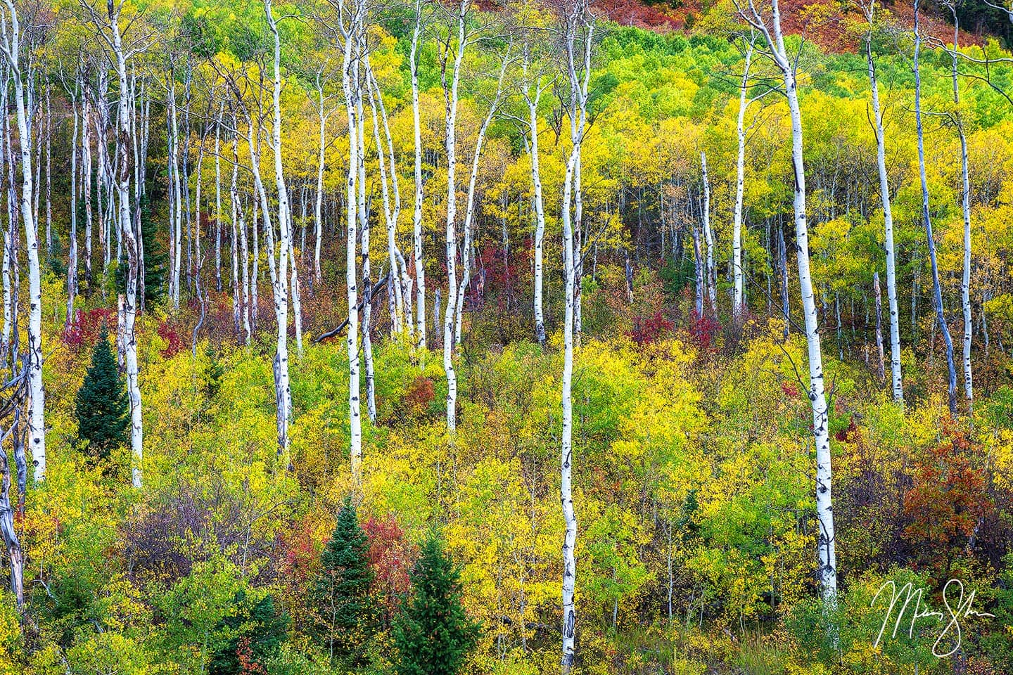 Limited edition luxury fine art print of Sticks from Mickey Shannon Photography. Location: McClure Pass, Colorado