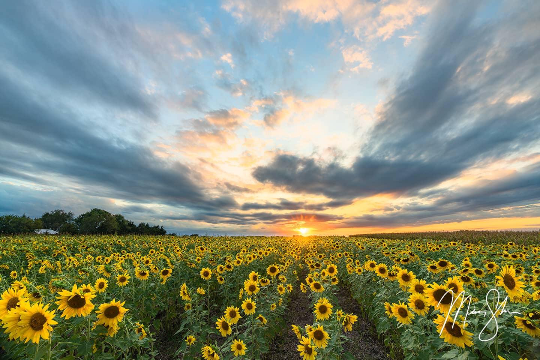 Sunflower Encore - Topeka, KS