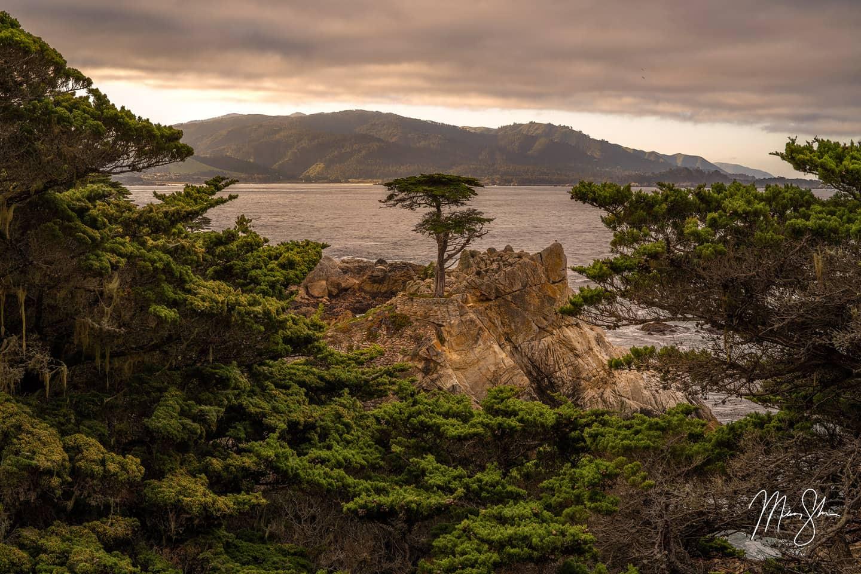 The Sole Survivor - Lone Cypress, Pebble Beach, California