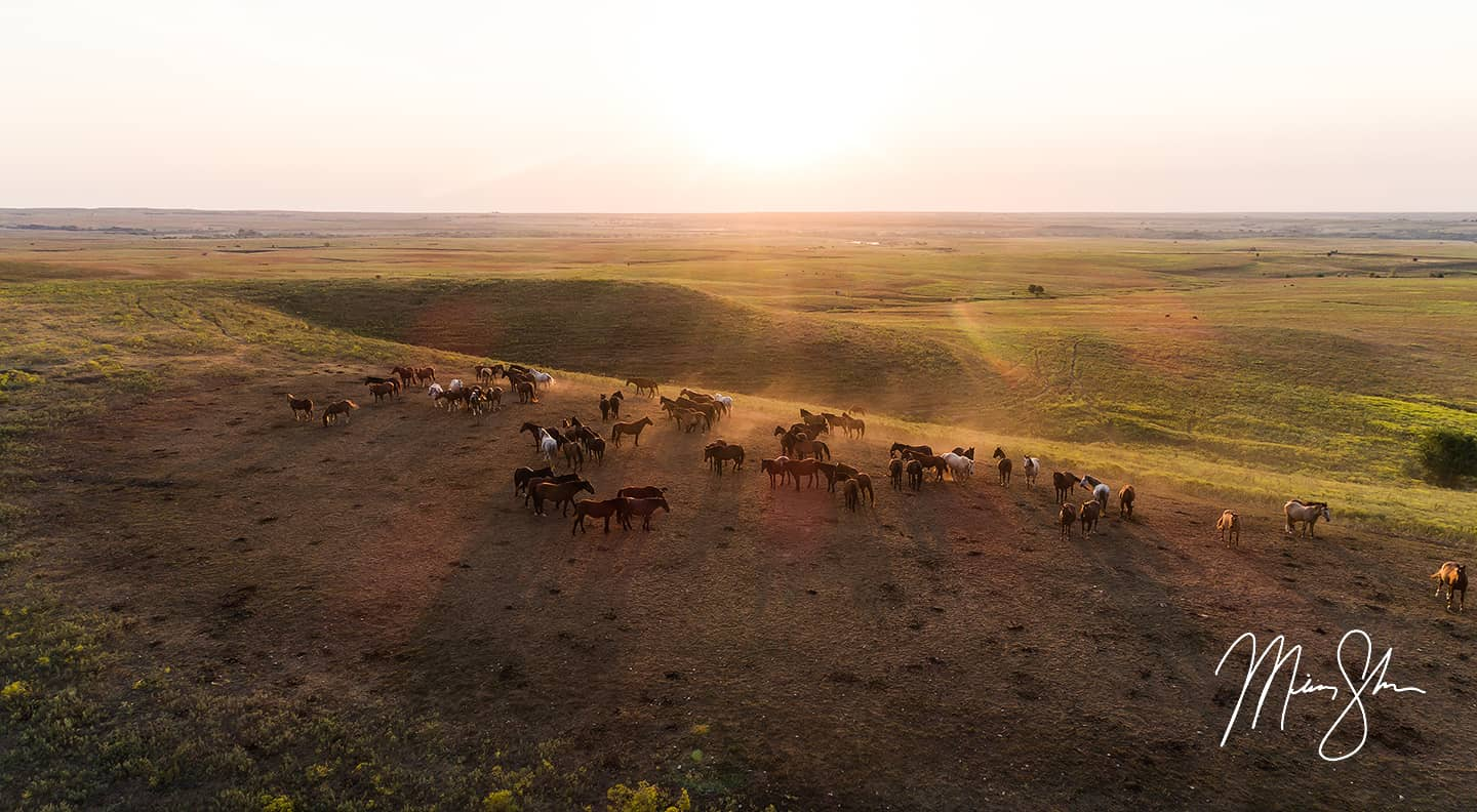 The Wild Horses of the Flint Hills