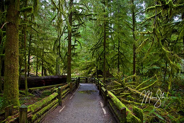Ancient Cathedral Grove