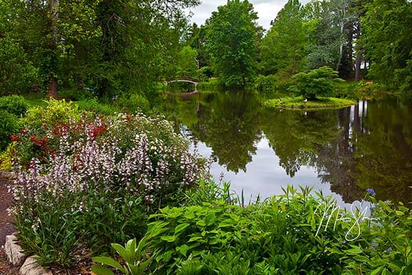 Bartlett Arboretum Pond