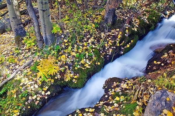 Boulder Brook Autumn Flow