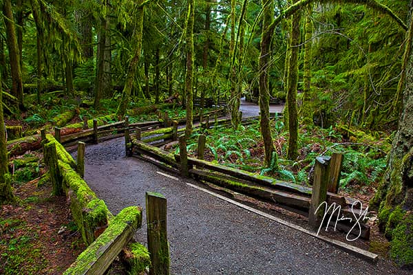 New Photos Gallery - Featured: Cathedral Grove