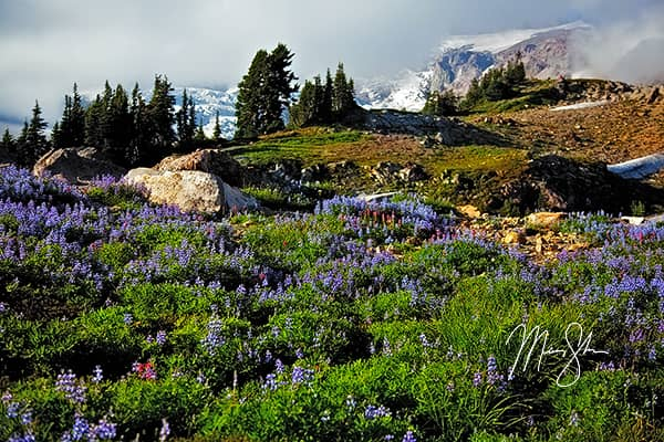 Flowers And Glaciers