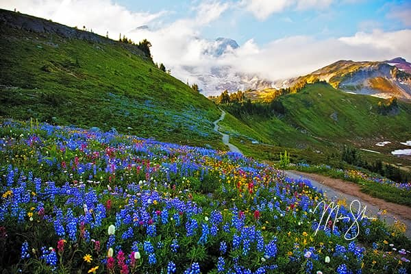 Flowers at Mount Rainier National Park