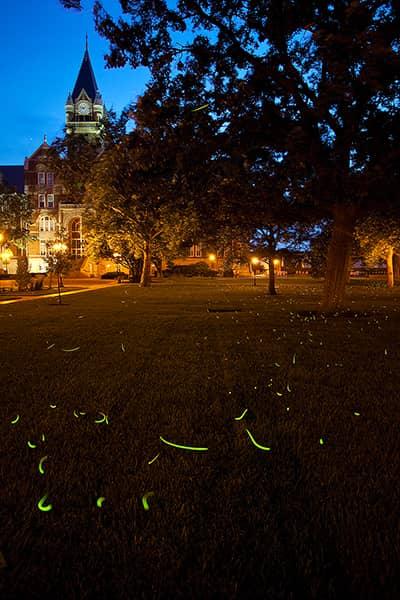 Friends University Fireflies