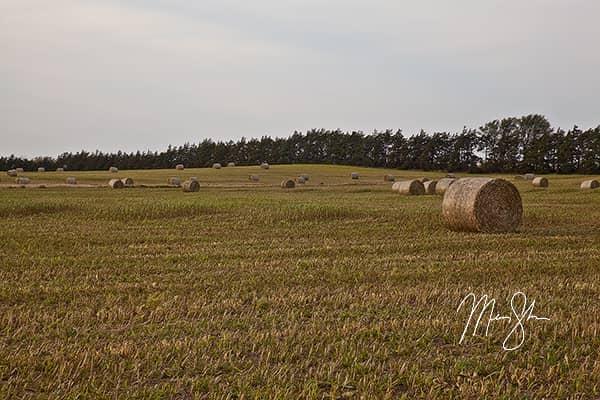 Gypsum Hills Fields