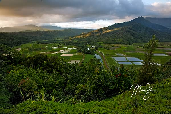 Hanalei Valley Sunrise