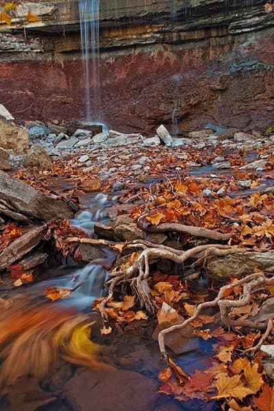 Leaves of Fallen Gold