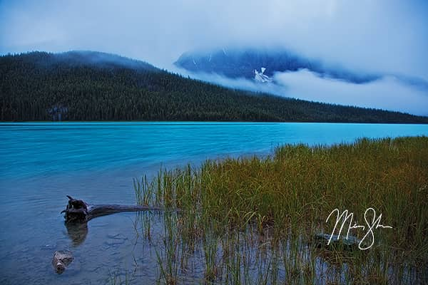 Misty Morning At Waterfowl Lake