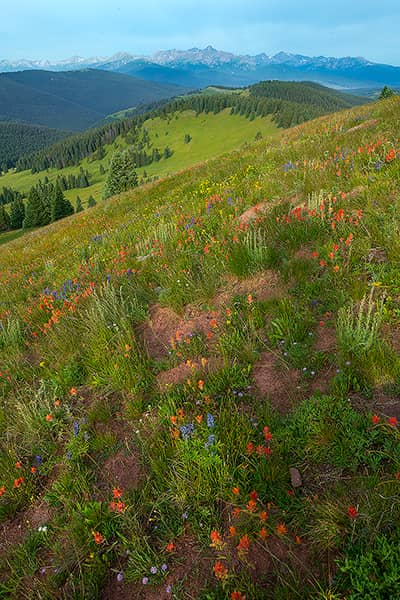 Mount of the Holy Cross Wildflower View