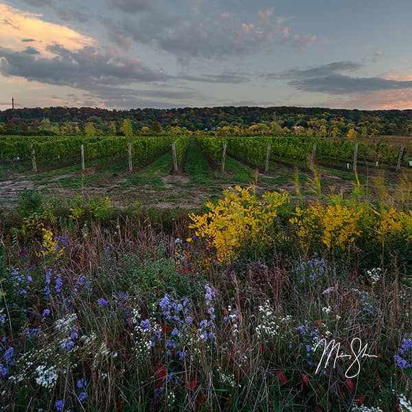 Niagara Vineyard Sunset