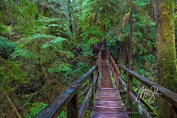 Pacific Rim Rainforest Trail