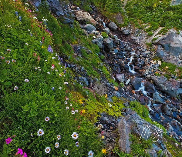 Rainier Flowers Stream