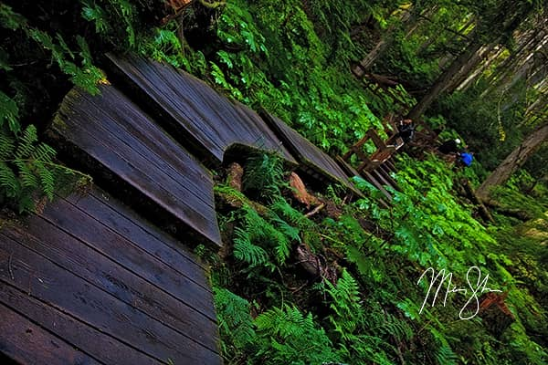 Revelstoke Giant Cedars Boardwalk Trail