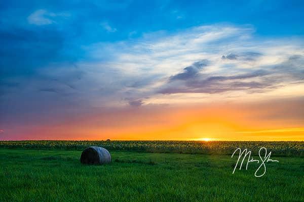 Sunflower Field Starburst Sunset