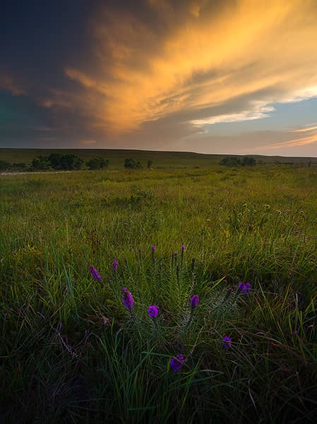Tallgrass Prairie Summer Sunset