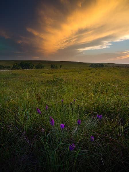 Tallgrass Prairie Summer Sunset