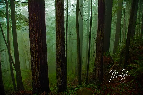 Redwood National Park Photo Gallery