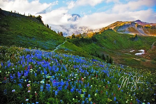 The Wildflowers of Mount Rainier