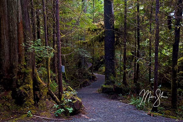 Ucluelet Ancient Cedars Trail